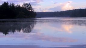 Rain rippling on the surface of a lake. Foggy lake with birds grass and trees on a rainy day stock footage