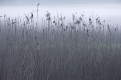 Foggy lake Stock Photos