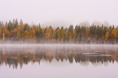 Foggy lake scape and vibrant autumn colors in trees. At dawn Royalty Free Stock Image