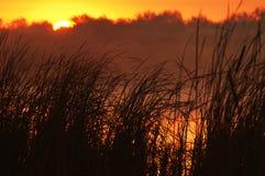 Foggy lake at sunrise Stock Photography
