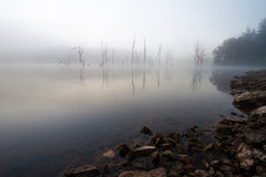 Foggy Lake with trees Royalty Free Stock Photo