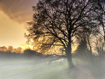 Foggy landscape. A foggy morning landscape of a tree Royalty Free Stock Photography