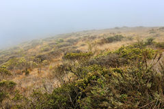 Foggy landscape Royalty Free Stock Images