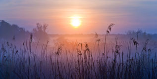 Foggy Landscape. Early Morning on a meadow. Shallow depth of field Royalty Free Stock Images