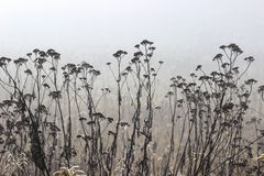 Foggy landscape. Royalty Free Stock Photography