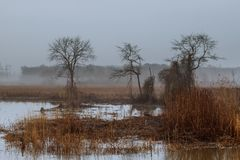 Foggy landscape in the greenwood, hornbeam trees, rainy autumn wether, gloomy mood. Autumn mist fog rainy day stock photo