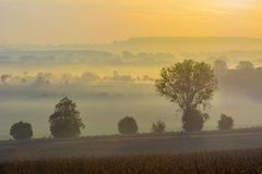 Foggy landscape. In morning with sunrise Royalty Free Stock Image