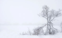 Foggy landscape with old broken tree and snowy field Stock Photos