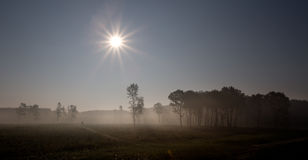 Foggy landscape in plains Royalty Free Stock Photo