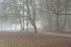 Foggy Lane Stock Image