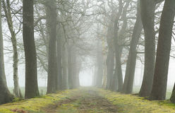 Foggy lane Royalty Free Stock Images