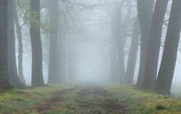 Foggy lane Stock Photography