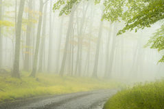Foggy Lane into the Forest. Fog and mist enshroud an unpaved road leading into the forest in West Virginia, creating a mysterious mood as the sun tries to break stock image
