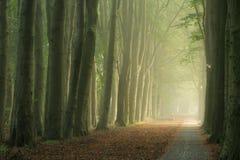Foggy lane of trees Stock Photos