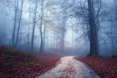 Foggy light in colorful autumn forest royalty free stock photos