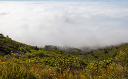 Foggy  - Marin County Stock Images