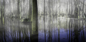 Foggy marsh. Fog rising from a flooded forest Royalty Free Stock Photo