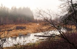 Foggy marshland. With creek and forest and dead trees with marsh grass royalty free stock images