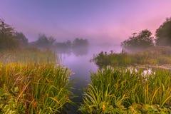 Foggy Marshland. On an early morning in september near Haren, groningen, Netherlands stock photos