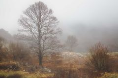 Foggy Matese Mountain Range Tree. On a spring afternoon in Italy stock photo