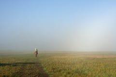 Foggy meadow stock photography