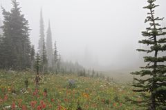 Foggy Meadow. Colorful meadow in the eerie, foggy landscape of Mount Revelstoke, Canada Stock Image
