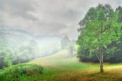 Foggy meadow Stock Photo