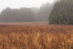 Foggy meadow in early morning Royalty Free Stock Photo