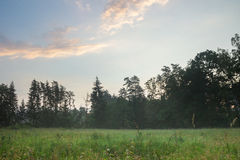 Foggy meadow landscape. stock images