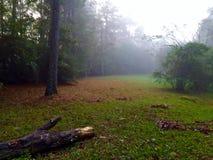 Foggy meadow Stock Photos