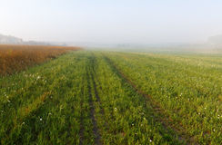 Foggy meadow Royalty Free Stock Image