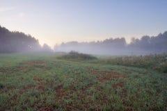 Foggy meadow sunrise Stock Photo