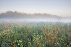 Foggy meadow sunrise Stock Image