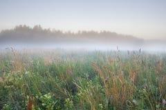 Foggy meadow sunrise Stock Image