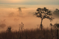 Foggy Meadow Sunrise. Foggy meadow with silhouetted trees Royalty Free Stock Photos