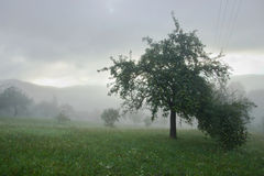 Foggy Meadow with Trees Royalty Free Stock Photo