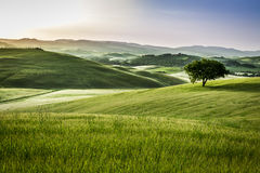 Foggy meadows in the morning, Tuscany Stock Image