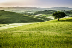 Foggy meadows in the morning, Tuscany Royalty Free Stock Photo