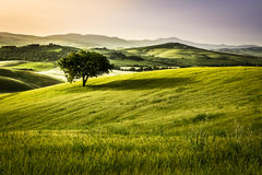 Foggy meadows in the morning, Tuscany Royalty Free Stock Images