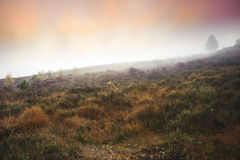 Foggy misty Autumn forest landscape at dawn Stock Images
