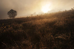 Foggy misty Autumn forest landscape at dawn Royalty Free Stock Photos