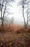 Foggy misty Autumn forest landscape at dawn Stock Photography