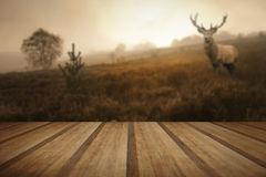 Foggy misty Autumn forest landscape at dawn with red deer stag w Stock Photos