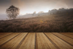 Foggy misty Autumn forest landscape at dawn with wooden planks f Royalty Free Stock Photos