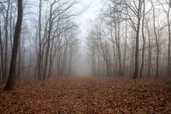 A Misty forest. A foggy and misty forest royalty free stock photos