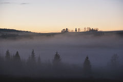 Foggy misty forest in sunset Royalty Free Stock Images