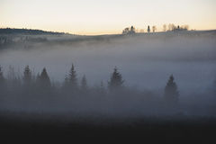 Foggy misty forest in sunset Royalty Free Stock Photo