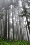 Foggy and misty forest in Taiwan Stock Photo