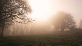 Winter morning in Ireland 4. A foggy misty morning in rural Ireland Royalty Free Stock Photos