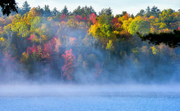 Foggy misty summer morning featuring colorful foliage and trees on an Ontario lake. Royalty Free Stock Image